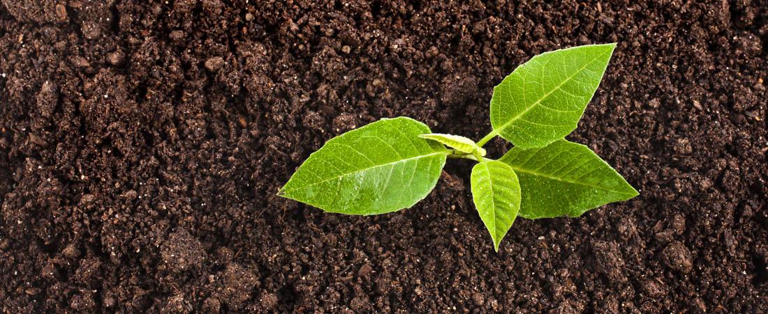 Compost Soil Viewpoint Farming